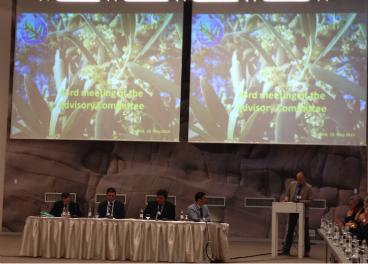 Nuevo Acuerdo del COI para el Aceite de Oliva